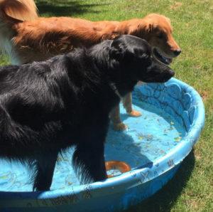 Everyone in the pool